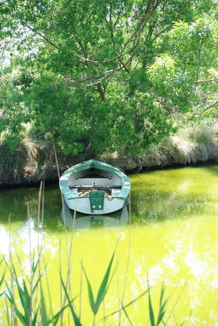 barque à l'eau sous les arbres
