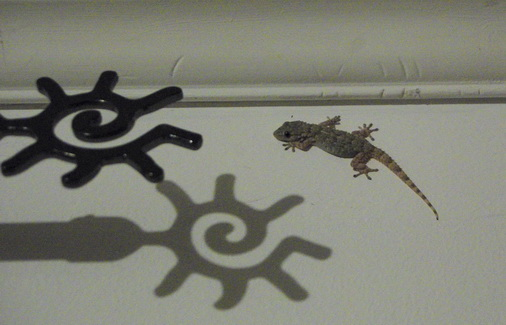 lézard au mur et ombre de la tringle à rideau