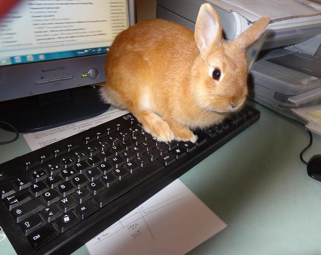 Mon nouveau lapin ne veut pas se connecter... B8f859acc8c4c195979a