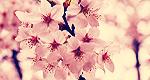 image_mamy