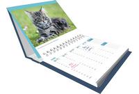 Agenda 2021 chats et chatons.
